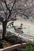 Diamond Valley Alpacas 018